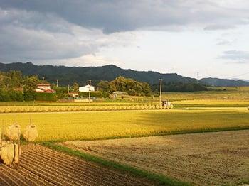 稲刈り後の水田