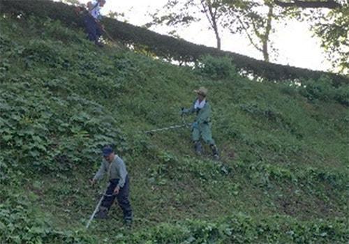 浮牛城草刈の様子