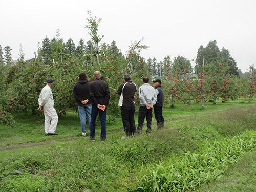 リンゴの木のオーナー制度