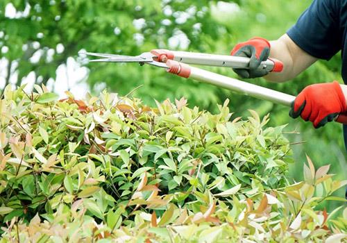 庭木剪定の基本を学ぶ