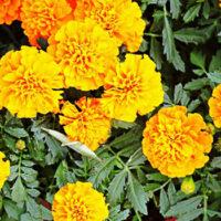 北上市花いっぱい運動