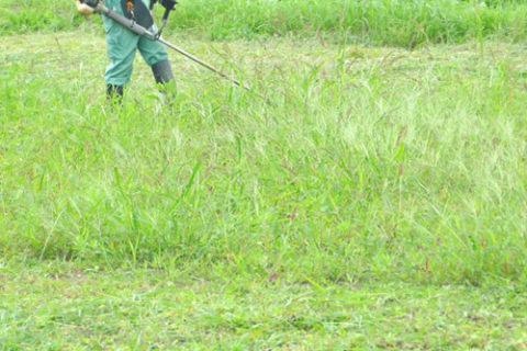 清掃・草刈りのお知らせ