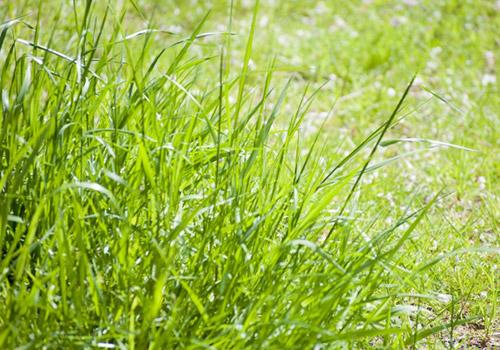 浮牛城の草刈り